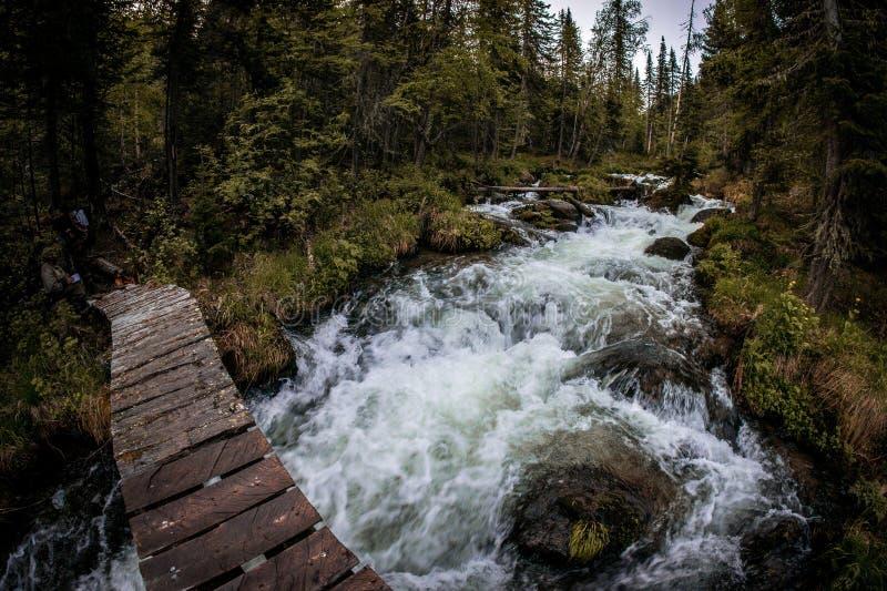 En träbro över en snabb bergström i Taiga den boreala skogen royaltyfria foton