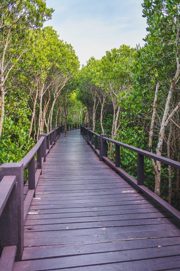 En träbro i mitt av en mangroveskog med härlig himmel royaltyfri bild