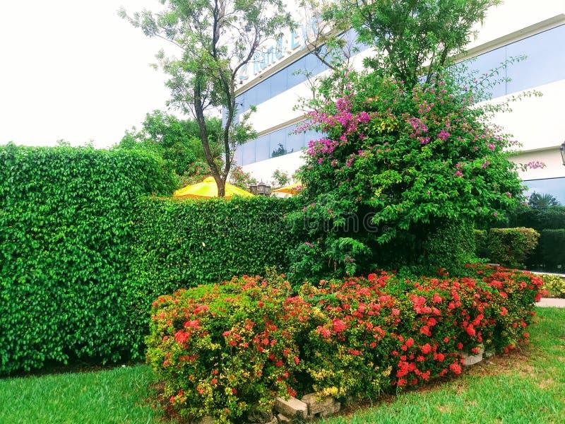 En trädgård i Miami, Florida Förenta staterna arkivfoton