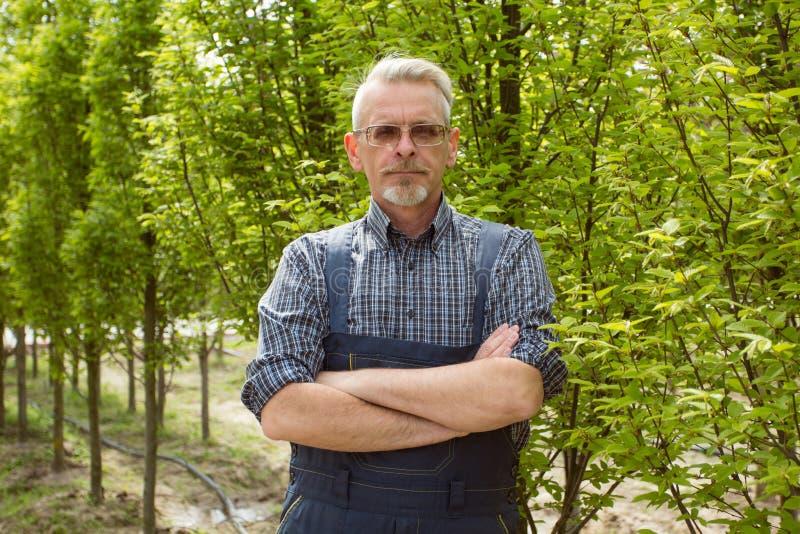 En trädgårdsmästare i en jumpsuit, hans händer vikta på hans bröstkorg mot bakgrunden av de unga träden royaltyfri foto