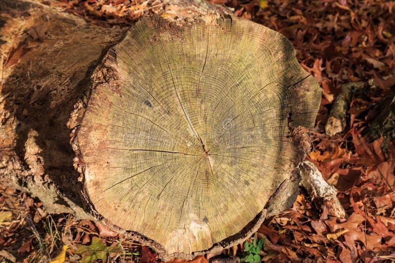 En trädstam arkivfoto