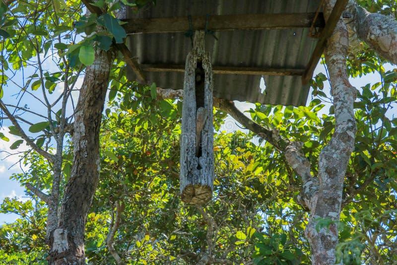 En träklocka med en klubba som gjordes från en trädstam, hängde på en stråle mellan träd på den Bali ön Balinesen Hindus gör kloc arkivbild
