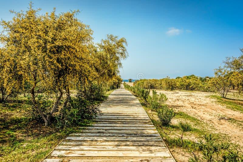 En trästrandpromenad som leder till stranden mellan gulaktig gräsplan arkivbilder
