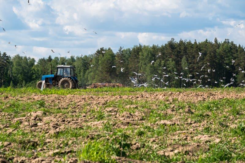 En traktor plogar fältet på en ljus solig dag Lantlig fjäderliggande arkivbilder