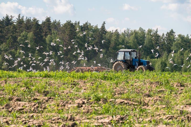En traktor plogar fältet på en ljus solig dag Lantlig fjäderliggande arkivbild