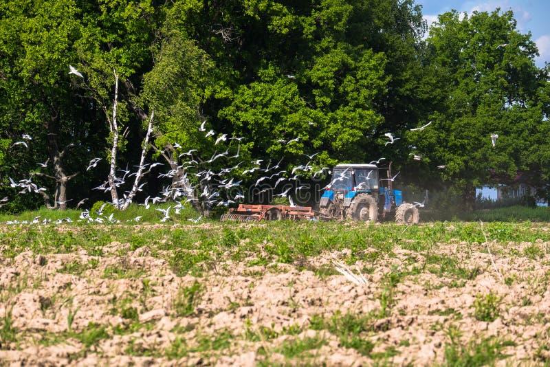 En traktor plogar fältet på en ljus solig dag Lantlig fjäderliggande arkivfoto