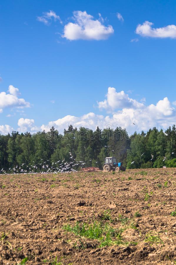 En traktor plogar fältet på en solig dag Lantlig fjäderliggande royaltyfri fotografi