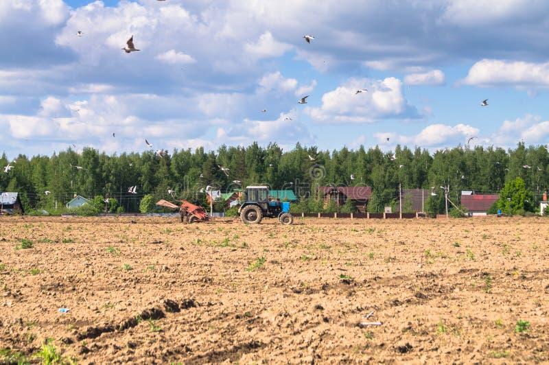 En traktor plogar fältet på en solig dag Lantlig fjäderliggande royaltyfria bilder