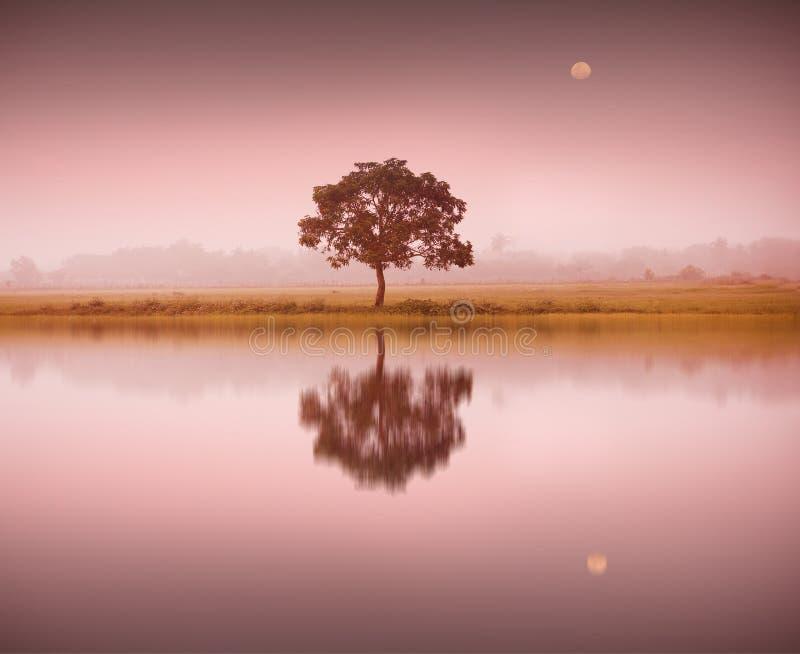 En tree och en moon arkivfoton