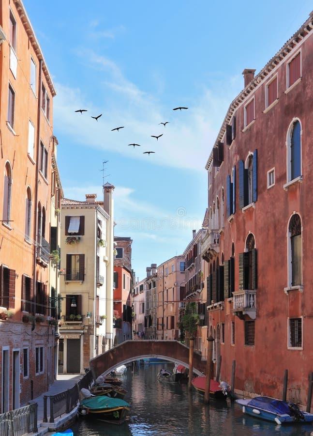 En triangulär flock av flyttfåglar över Venedig royaltyfri foto