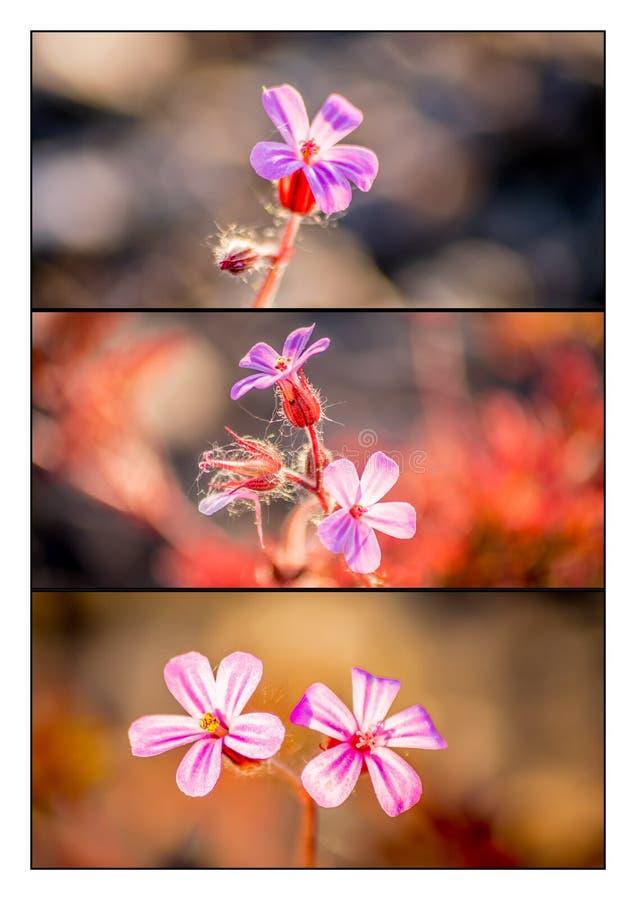 En triptyk av lösa blommor fotografering för bildbyråer