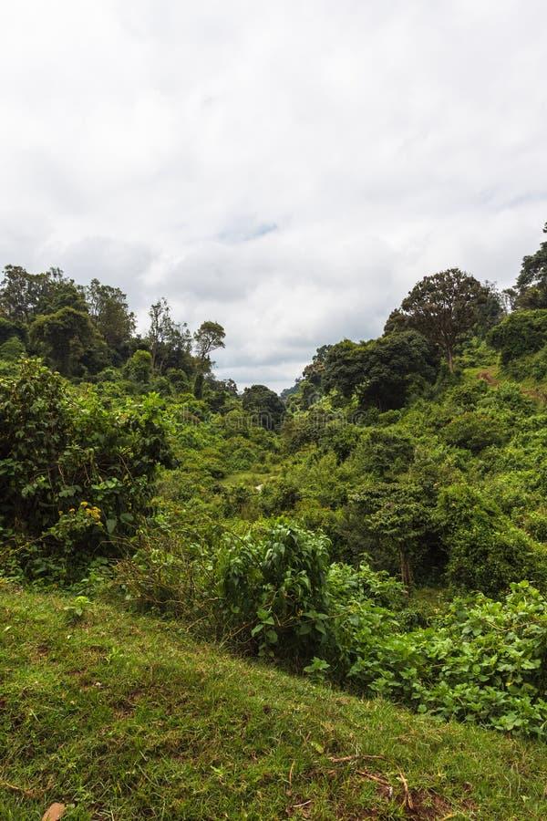 En tumult av grönska på berget Aberdare Kenya Afrika arkivfoto