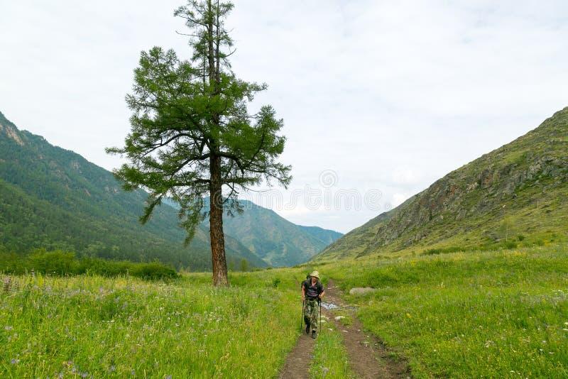 En turist går förbi ett enormt träd arkivfoton