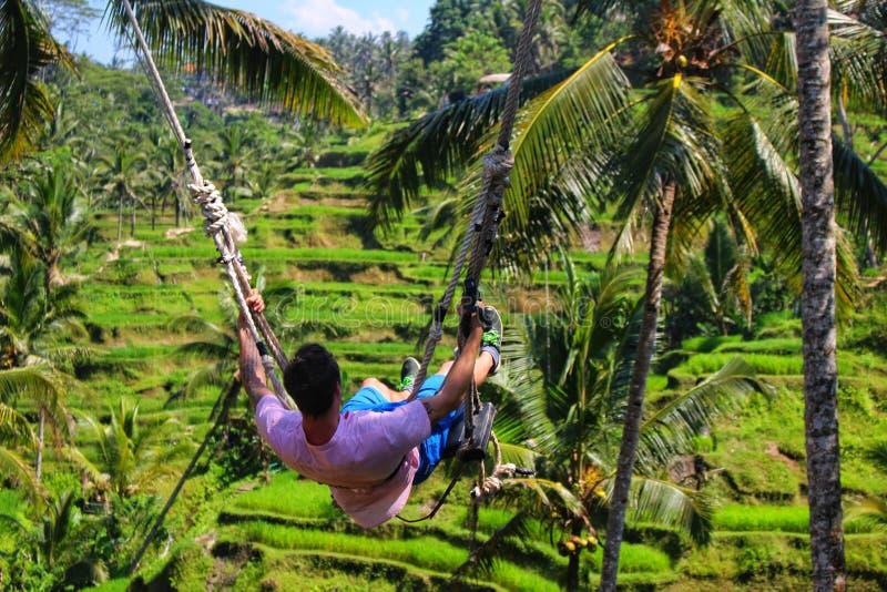 En turist tycker om en repgunga över de iconic risen terrasserar av Ubud Bali arkivfoto
