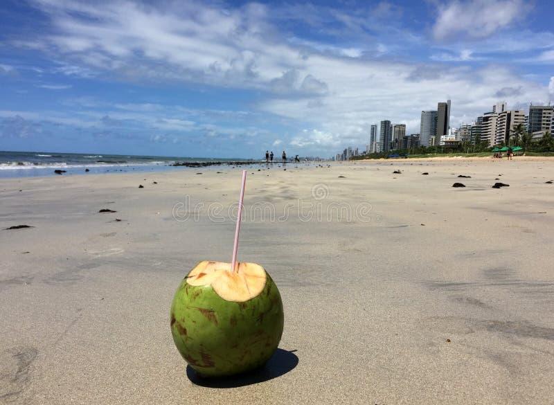 En typisk frukt från den nordöstra regionen av Brasilien royaltyfria bilder