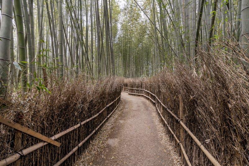 En tyst bana inom bambudungen av Arashiyama, Kyoto, Japan royaltyfri fotografi