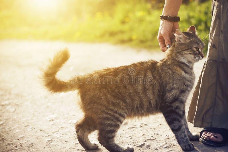 En un camino una mujer que frota ligeramente un gato sin hogar mullido fotografía de archivo libre de regalías