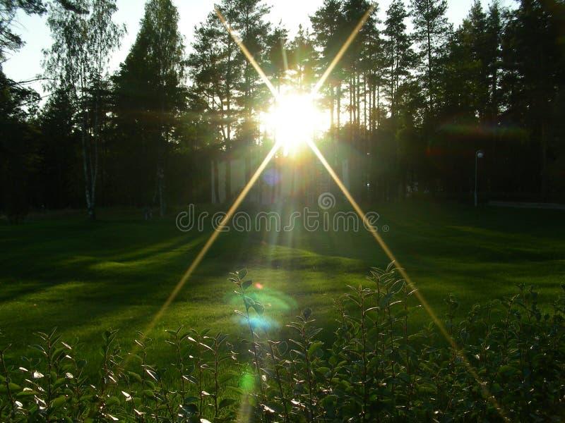 En un prado verde la puesta del sol mira el radiante, iluminando las hojas fotos de archivo libres de regalías
