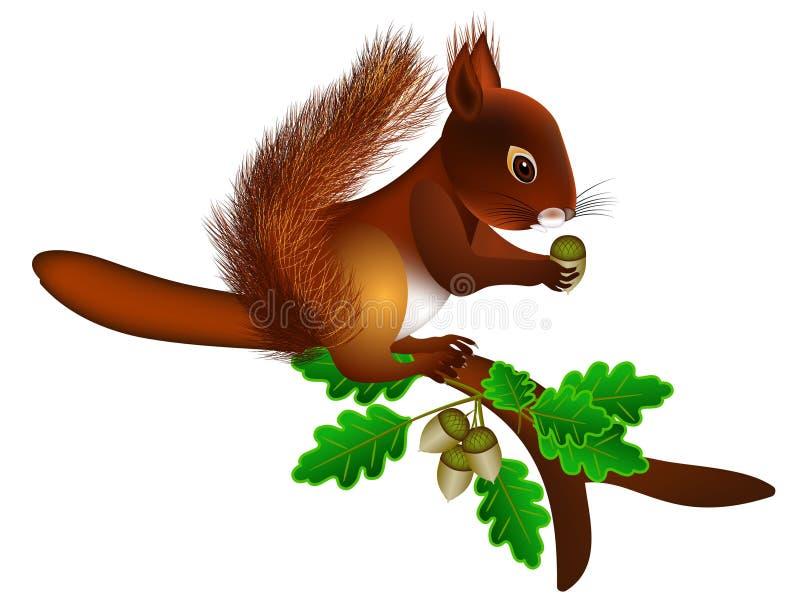 En una ardilla de la rama con las bellotas stock de ilustración