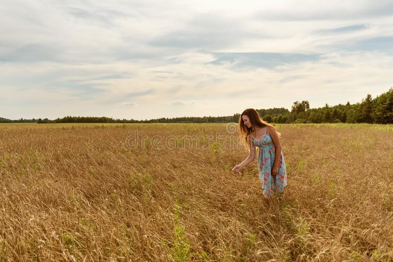 En ung bondaktig flicka i en retro tappningklänning på solnedgången på en plockning för vetefält royaltyfri bild