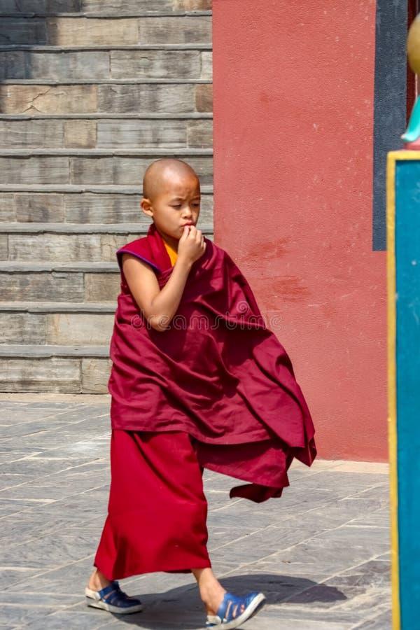 En ung buddistisk monk arkivfoto
