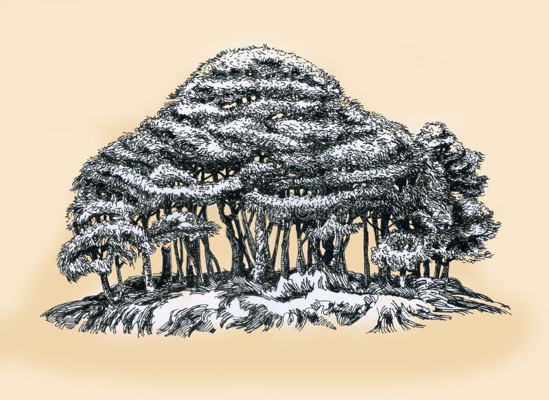 En ung dunge av träd royaltyfri illustrationer
