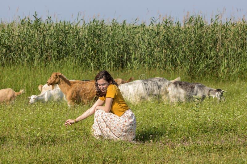 En ung flicka bland en flock av getter royaltyfria foton