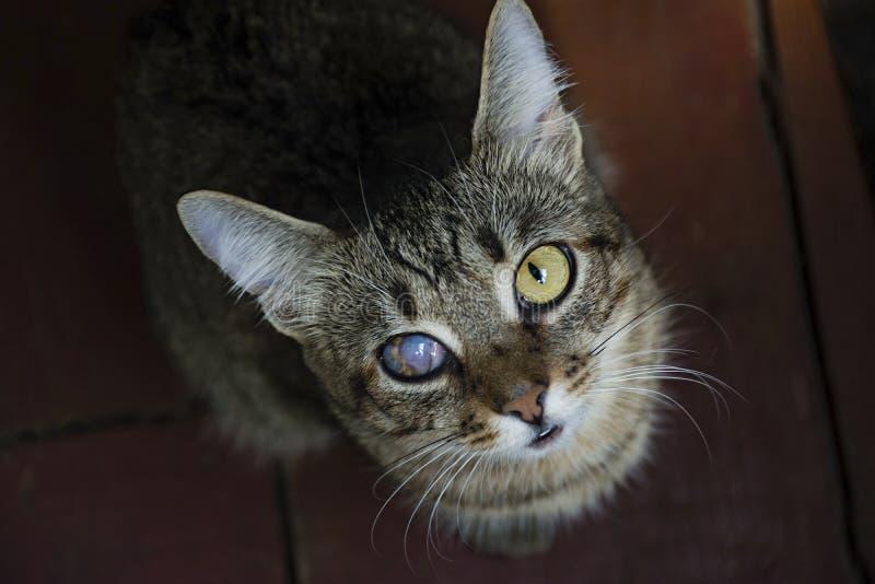 En ung katt med ett skadat öga som ser kameran ovanf?r sikt spelrum med lampa royaltyfria foton