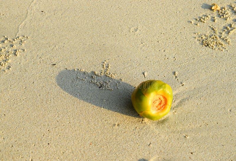 En ung kokosnöt - grön mjuk kokosnöt - på Sandy Beach - regel av tredjedelar i stilleben royaltyfri fotografi