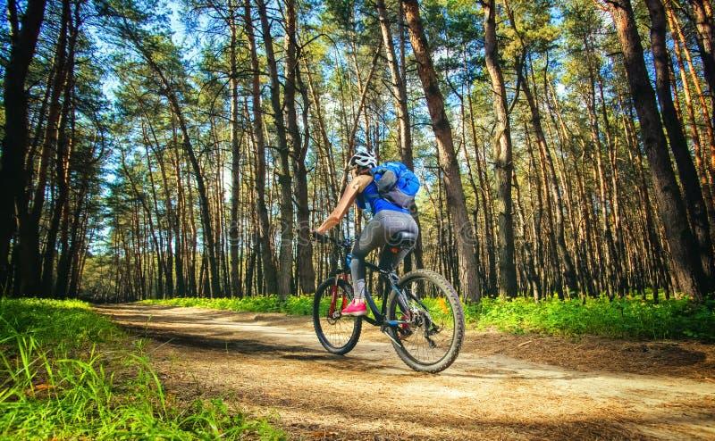 En ung kvinna - cyklist i en hjälm som rider en mountainbike utanför staden, på vägen i en pinjeskog arkivbild