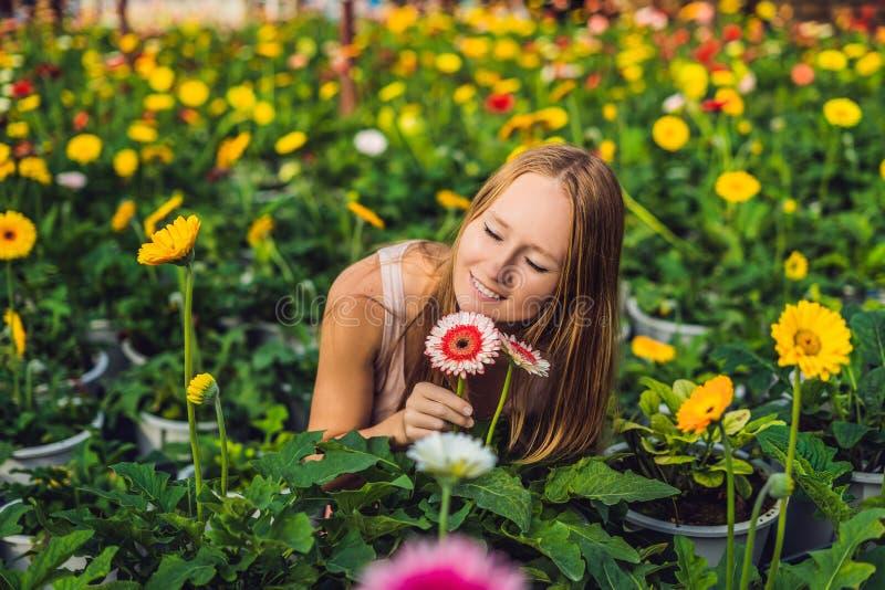 En ung kvinna på en gerberalantgård Blommaodling i greenhous royaltyfria foton