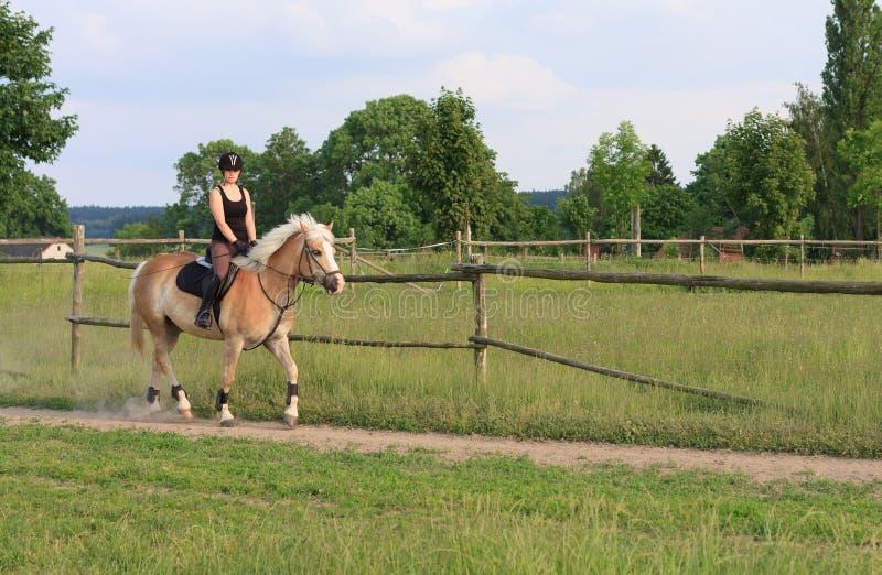 En ung kvinna som rider en häst Haflinger fotografering för bildbyråer
