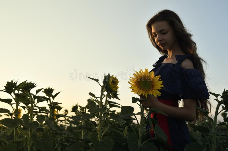 En ung kvinna står bland fälten av solrosor royaltyfri fotografi