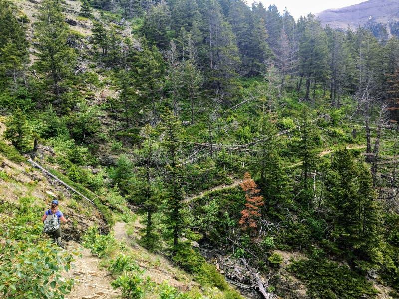 En ung kvinnlig fotvandrare som navigerar skogarna, terrängen för stenigt berg och snön, täckte dalar av Rocky Mountains arkivfoto