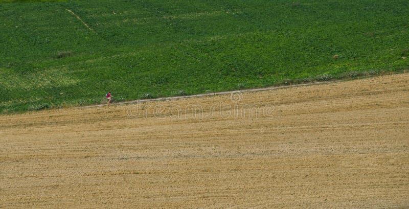 En unidentifiable man som cyklar upp en landsväg fotografering för bildbyråer