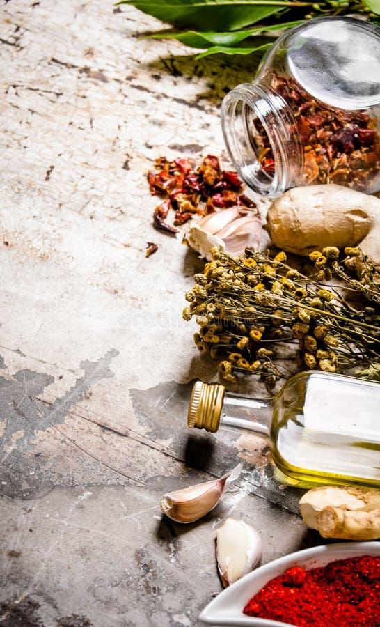 En uppsättning av torkade kryddor och örter med olivolja royaltyfri foto