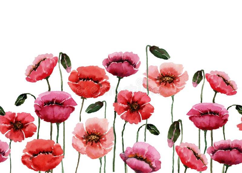 En uppsättning av vildblommavallmo som är röda som är rosa och som är purpurfärgade på gröna stammar vattenf?rg p? vit bakgrund vektor illustrationer