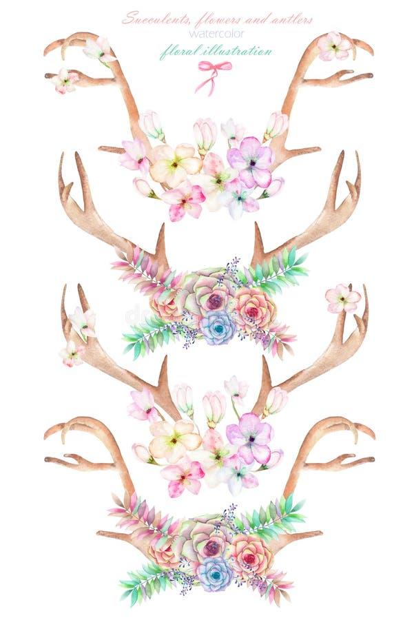 En uppsättning med vattenfärghornen på kronhjort, horn som flätas ihop av blommor, suckulenter, sidor och växter vektor illustrationer