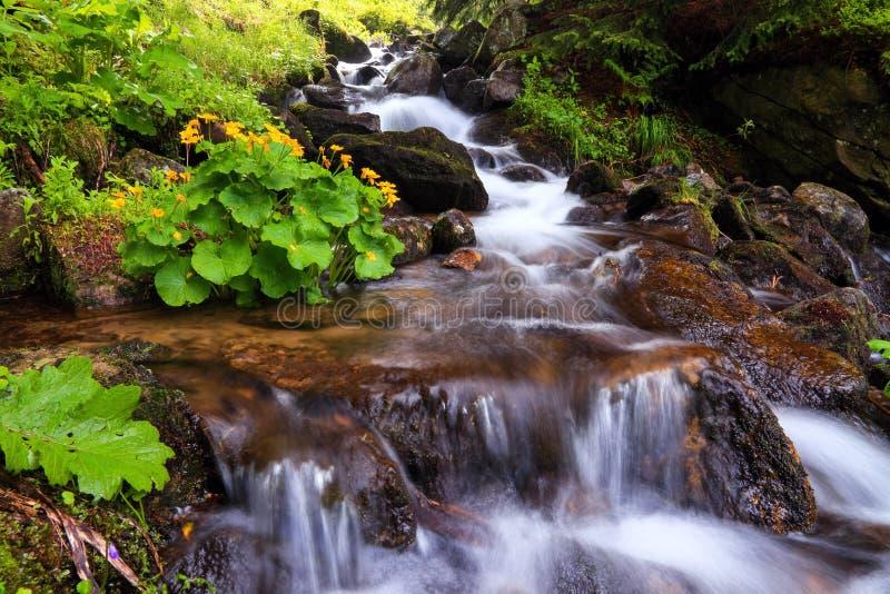 En ursnygg bergvattenfall flödar bland grön skog och kör ner de härliga gråa stenarna fotografering för bildbyråer