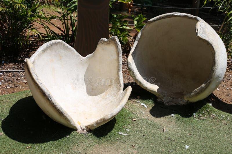 En utställning av den vita äggskalet som göras av granit i zoo royaltyfri bild