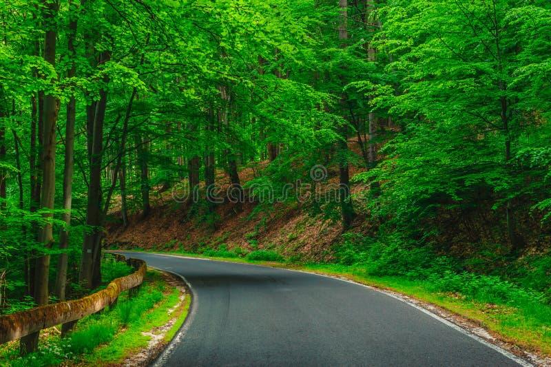 En väg bland grönska royaltyfri bild