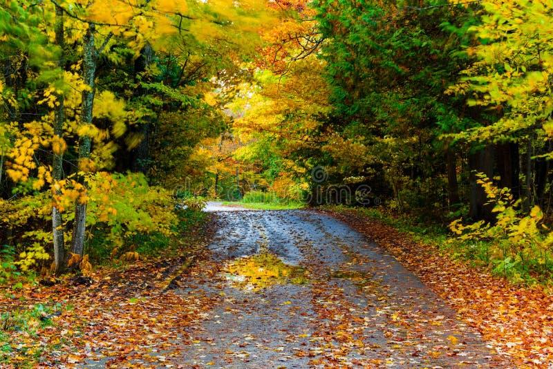 En väg buktar till och med de färgrika höstträden på den Mackinac ön royaltyfri bild