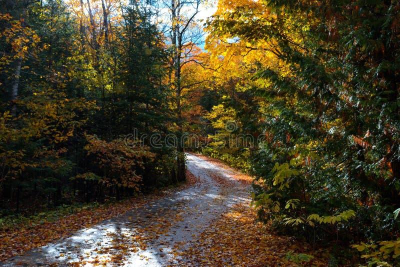 En väg buktar till och med höstträden på den Mackinac ön royaltyfri fotografi