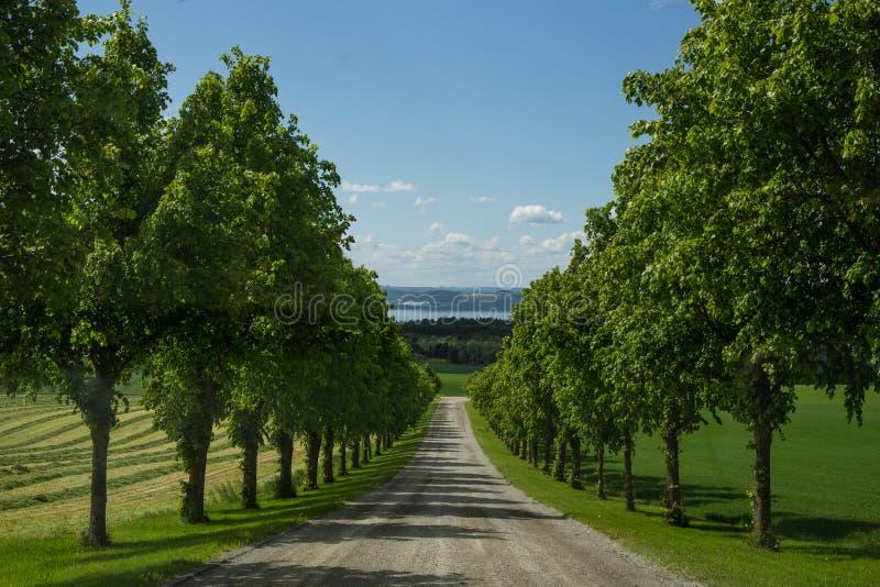 En väg i yhebygd med symmetriska träd på varje sida royaltyfri fotografi