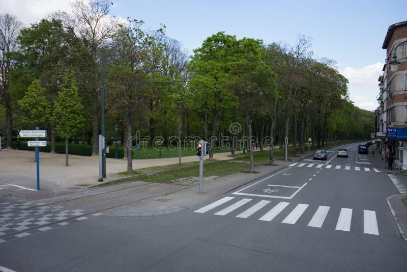 En väg som fodras med träd i Bryssel royaltyfria foton