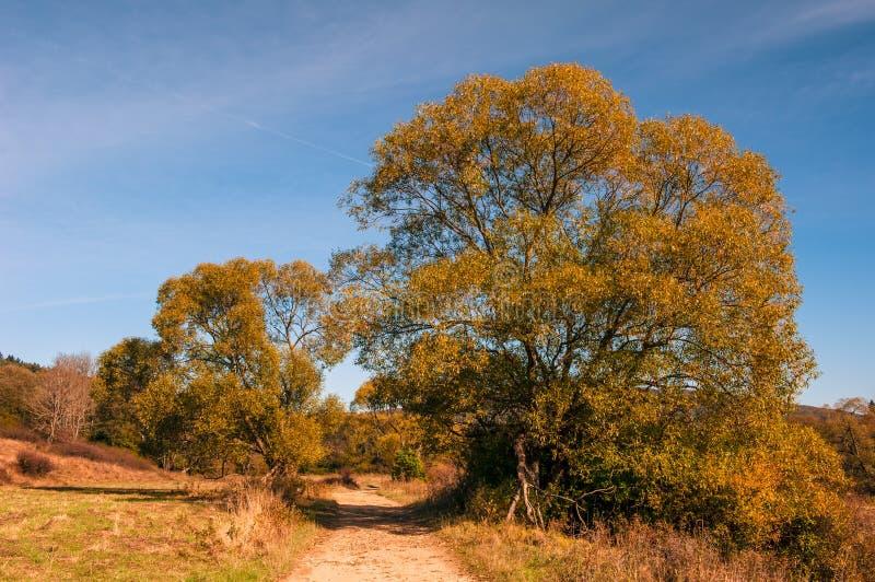 En väg som leder mellan träd till och med en dal i bergen arkivbilder