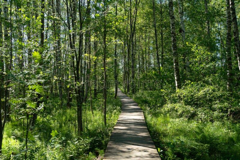 En väg som passerar till och med skogen arkivfoton