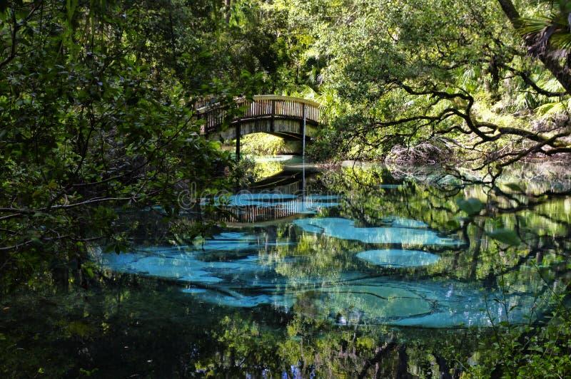 En välvd träspång över den blåa och smaragdtipsen s FL USA royaltyfri fotografi