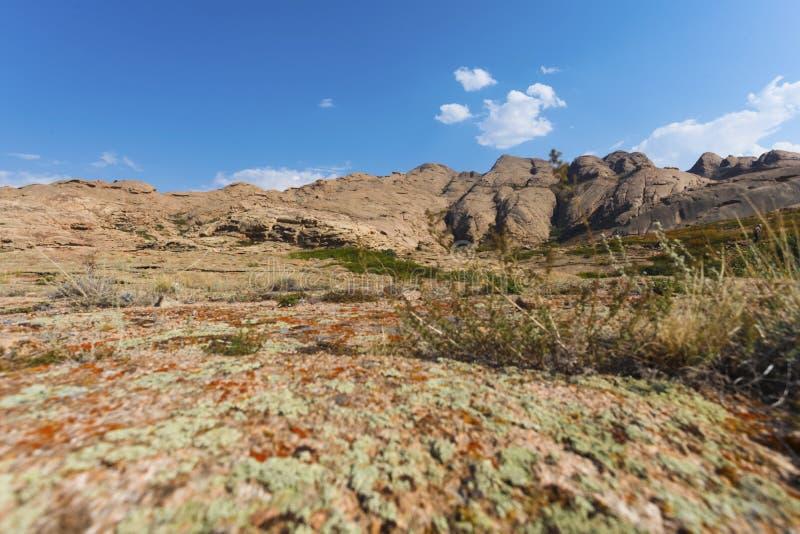 En växer på stenar med laven och mossa på bakgrunden av berg arkivfoton