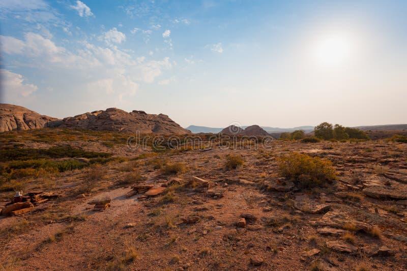 En växer på stenar med laven och mossa på bakgrunden av berg royaltyfria bilder